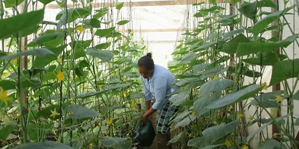 Grandma Berta in the Greenhouse