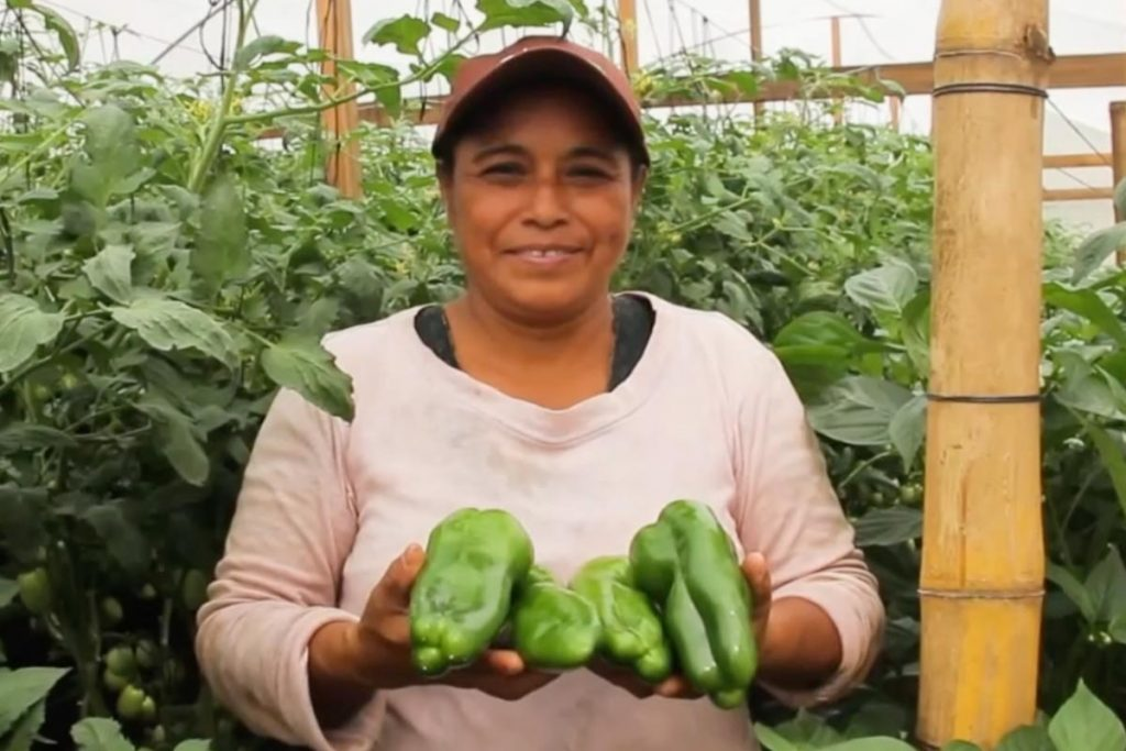Grandma's Greenhouse - Story